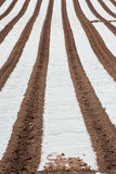 Polytunnel Rows Royalty Free Stock Image