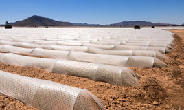 Polytunnels - intensivt modernt jordbruk Arkivfoton
