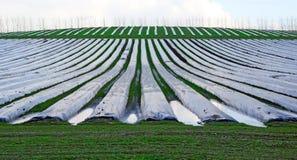 Polytunnelsglazen kappen op landbouwbedrijf Stock Afbeelding