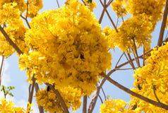 Pom del pom del flor Imagenes de archivo