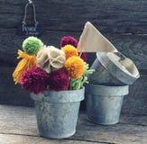 Pom Pom kwiat Zdjęcie Stock