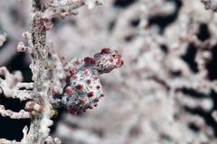Pomacentridae, ψάρια κλόουν ή Anemonefish Στοκ φωτογραφία με δικαίωμα ελεύθερης χρήσης