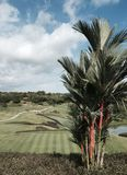 Pomadki palma przegapia pole golfowe Fotografia Stock