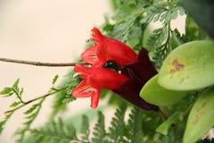 Pomadki roślina Zdjęcia Stock