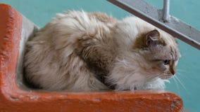 Pomaga bezdomny kotów zaniechany pojęcie Śliczny zaniechany kota obsiadanie na krokach Zdjęcie Royalty Free