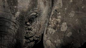 pomalowany słonia Zdjęcia Stock