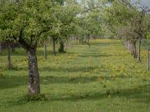 Pomar biológico em Alemanha - Baviera foto de stock