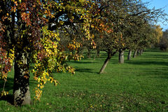 Pomar com cores do outono foto de stock