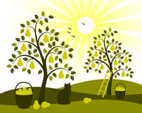 Pomar da árvore de pera ilustração do vetor