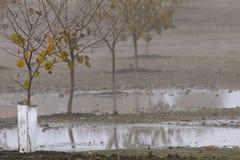 Pomar da avelã vestido em cores da queda Foto de Stock