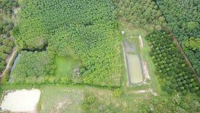 Pomar das árvores de Durian e plantação das árvores da borracha video estoque