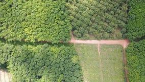 Pomar das árvores de Durian e plantação das árvores da borracha vídeos de arquivo