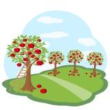 Pomar de Apple com colheita no prado verde Imagens de Stock Royalty Free