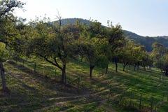 Pomar de Apple em montes de Alemanha fotografia de stock royalty free