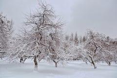 Pomar de Apple no inverno foto de stock