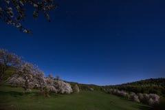 Pomar de cereja da noite com Lua cheia Fotografia de Stock Royalty Free