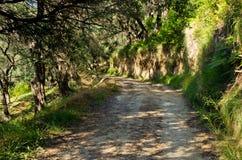 Pomar verde-oliva na ilha de Corfu, Grécia imagem de stock royalty free