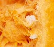 Pomarańczowa braja z ziarnami w bani jako tło obraz royalty free