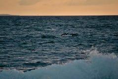Pomarańczowy tło w błękitnym morzu zdjęcie royalty free