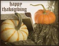 Pomarańcz i białego szczęśliwy dziękczynienia kartka z pozdrowieniami obraz stock