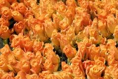 pomarańcze bukiet róż fotografia royalty free