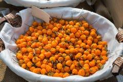 Pomarańcze Chili pieprzy Wysuszonego inside Biały puchar Zdjęcia Royalty Free