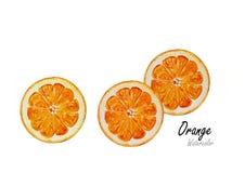 Pomarańcze cięcie Ręka rysujący akwarela obraz na białym tle również zwrócić corel ilustracji wektora Zdjęcie Stock