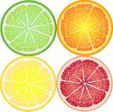 Pomarańcze, cytryna, wapno i grapefruitowy w zakończenie sekci, Obrazy Stock