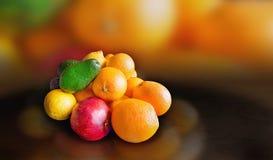 Pomarańcze, granatowiec, cytryna i avocados, obraz royalty free