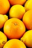 Pomarańcze i cytryny Fotografia Royalty Free