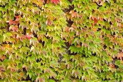Pomarańcze i zieleni liście Obraz Stock