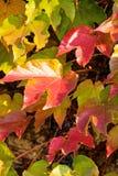 Pomarańcze i zieleni liście Obraz Royalty Free
