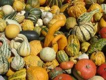 Pomarańcze, kolor żółty, zieleń i pasiaste banie, Zdjęcie Royalty Free
