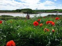 Pomarańcze kwiaty i życia boja nadmorski Fotografia Royalty Free