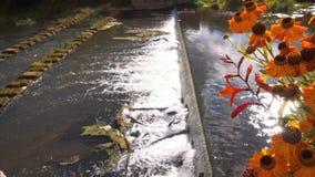 Pomarańcze kwitnie przy starą tamą Zdjęcie Royalty Free