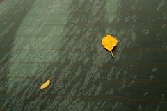 Pomarańcze liście na samochodowym tylni szkle obraz royalty free