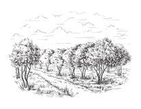 Pomarańcze - Pomarańczowego drzewa pomarańcze park ilustracji