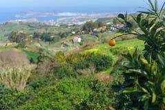 Pomarańcze przeciw pięknej dolinie i las palmas, Gran Canaria, Sp zdjęcie stock