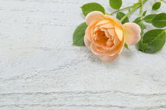 Pomarańcze róża na białym drewnianym backgound Obrazy Royalty Free