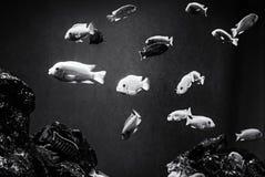 Pomarańcze ryba pod wodą, denna scena, bezbarwna zdjęcia stock