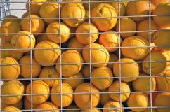 Pomarańcze w klatce Obraz Royalty Free