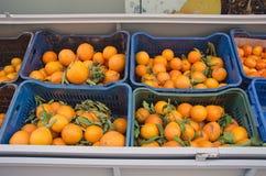 Pomarańcze w plastikowych pudełkach Fotografia Royalty Free