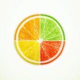 Pomarańcze, wapno, cytryna i grapefruitowy ćwiartujący, royalty ilustracja