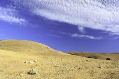 Pomarańczowa łąka z niebieskim niebem Fotografia Stock
