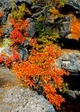 Pomarańczowa łuna Obrazy Royalty Free