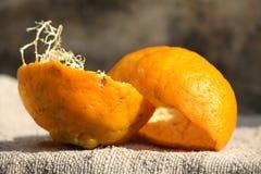 pomarańczowa łupa Obrazy Stock
