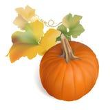 Pomarańczowa bania z multicolor liśćmi - wektor Zdjęcie Royalty Free