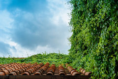 Pomarańczowa ceramiczna dachowa płytka zakrywająca z winogradami Obraz Royalty Free