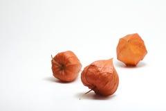 Pomarańczowa Chińskiego lampionu roślina zdjęcia royalty free