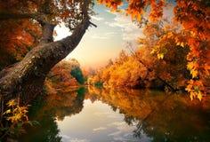 Pomarańczowa jesień na rzece obrazy royalty free